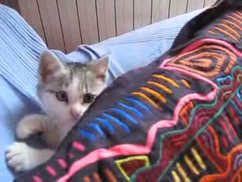 From feral to friendly: domesticating kittens