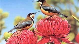 تعليم اسماء الطيور باللغة الانجليزية