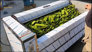 작두콩세척기 구근류세척기 채소세척기 과일세척기 (Sma…