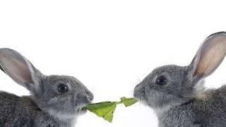 #1860. Кролики и зайцы (В мире животных)