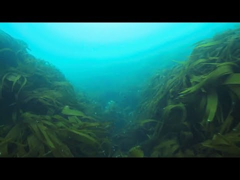 Discover the Eddystone Reef with the Marine Conservation Society and Princess Yachts
