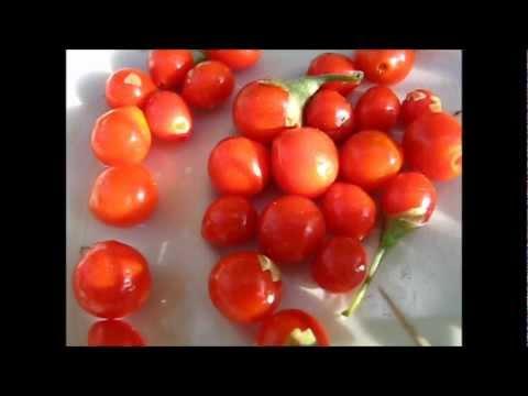 """""""Goji"""" Berry Harvest (•‿•)  ♥"""