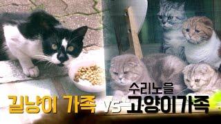 수리노을 고양이 가족 VS 길냥이 가족 Suri&Noel Cats vs Street Cats [SURI&NOEL]