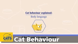 Cat body language | Cat Behaviour Explained ep1