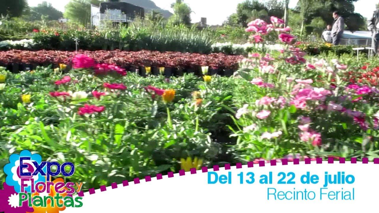 Atlixco objetivo de la expo flores y plantas 2012 youtube for Viveros de plantas en atlixco
