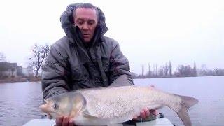 Джиговая ловля толстолоба осенью на реке Стугна. Рыбалка в Украине