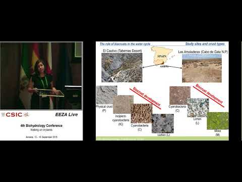 The key role of biocrusts in drylands water cycle