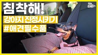 [자연24] [광고] 침착맨처럼 강아지 진정시키기 애견…