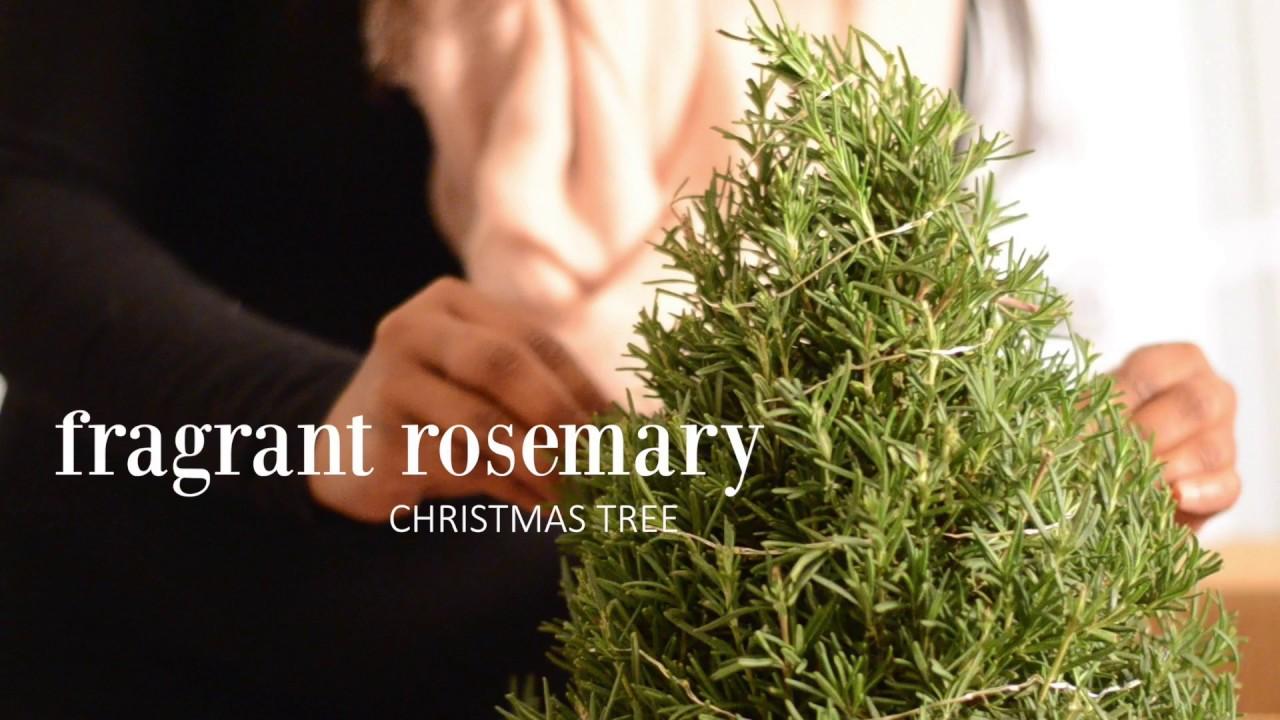 Fragrant Rosemary Christmas Tree - YouTube