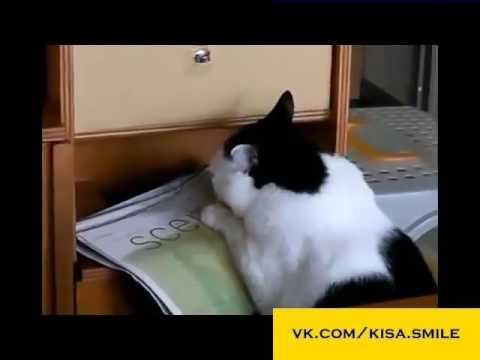 Вк толстый кот