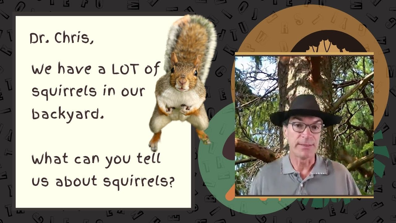 Squirrels Fun Kid Facts by Dr. Chris - from The Thing I Do Show - Teacher and Parent Education