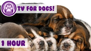 1 hour of TV for Dogs with Therapy Music to help comfort your doggie - nature footage