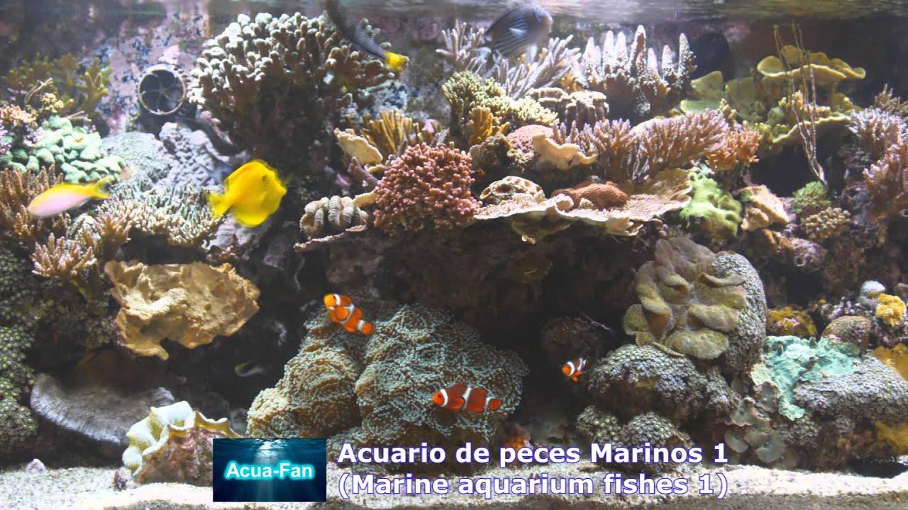 Acuario de peces marinos 1 marine aquarium fishes 1 for Peces de acuario marino