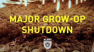 One of Province's Largest Grow-ops Shutdown in Stettler