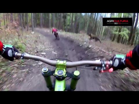 Mira el escalofriante encuentro entre un ciclista y un oso que por poco acaba en tragedia