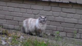 Мега кот домой идет! Mega cat is coming home! Cats in Ukraine Украинские кошаки