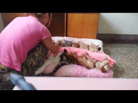 *~龍媽六寶~* 可愛貓咪~ 我家的5寶 躺一起蓋棉被 好萌好可愛