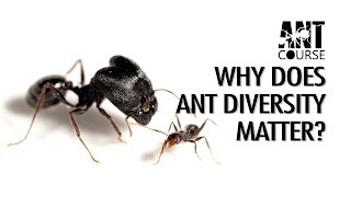 Ant Course Presents: Why Does Ant Diversity Matter?