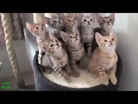 funny videos of cats|Funny Dogs Videos |Best Funny Videos