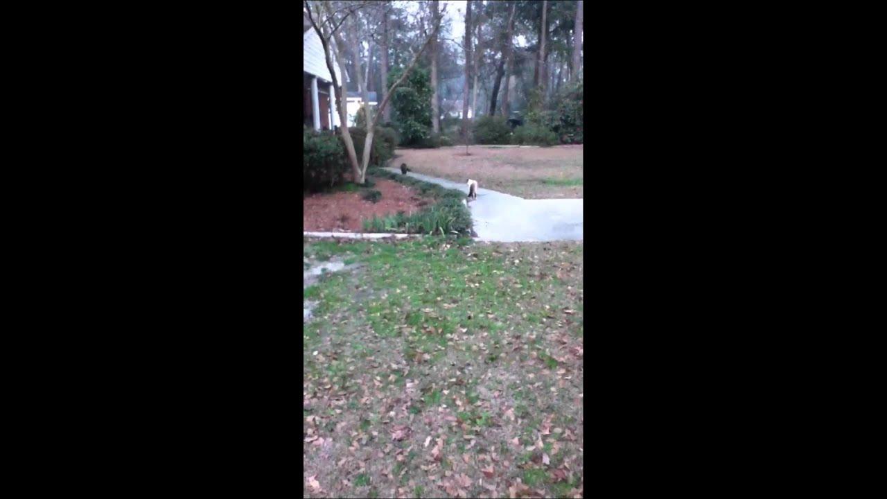 Vicious Catfight Youtube