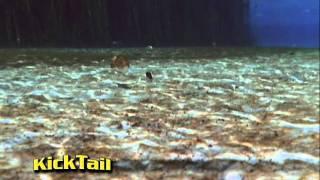 Kick Tail Fishing Lure