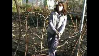 Обрезка винограда осенью для новичков(Формировка