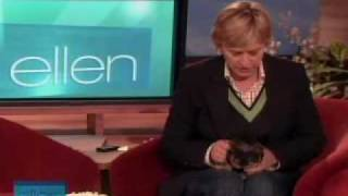 Ellen with a baby yorkie thumbnail