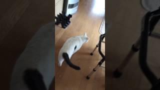家の猫のしつけ!トレーニング.