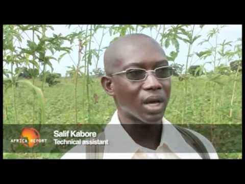 www.africareport.com video - Organic Cotton, Burkina Faso