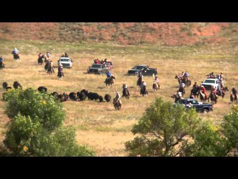 2015 Custer State Park Buffalo Roundup
