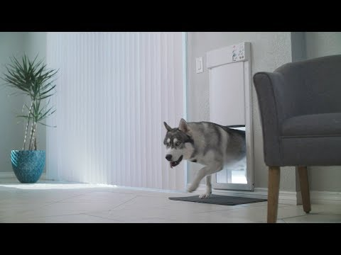 Who Let the DOGS Out: Automatic Pet Doors