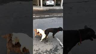 Threesome with dogs in Bali