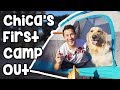 Chica's First Camping Trip