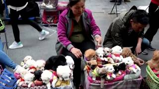 This is How They Sell Puppies in China!  (THIS VIDEO WILL MAKE YOU SAD)