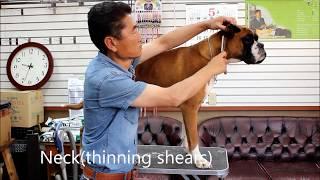 윤형석애견미용원 James' Dog grooming Salon Boxer trimming T.0166800700