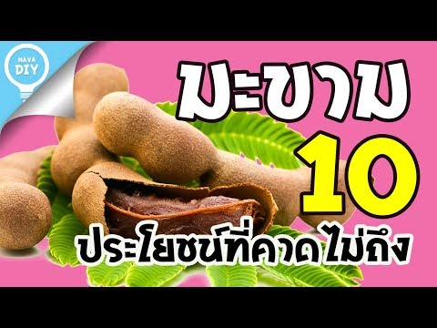Nava DIY | มะขาม 10 ประโยชน์ที่คาดไม่ถึง สมุนไพรไทย