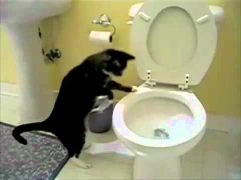 Cat Flushing A Toilet Music Video Parry Gripp - YouTube