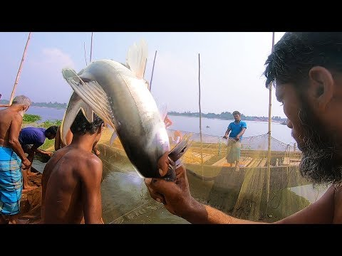 Daily River Fishing And Daily Fresh Fish Catching   Real Fishing