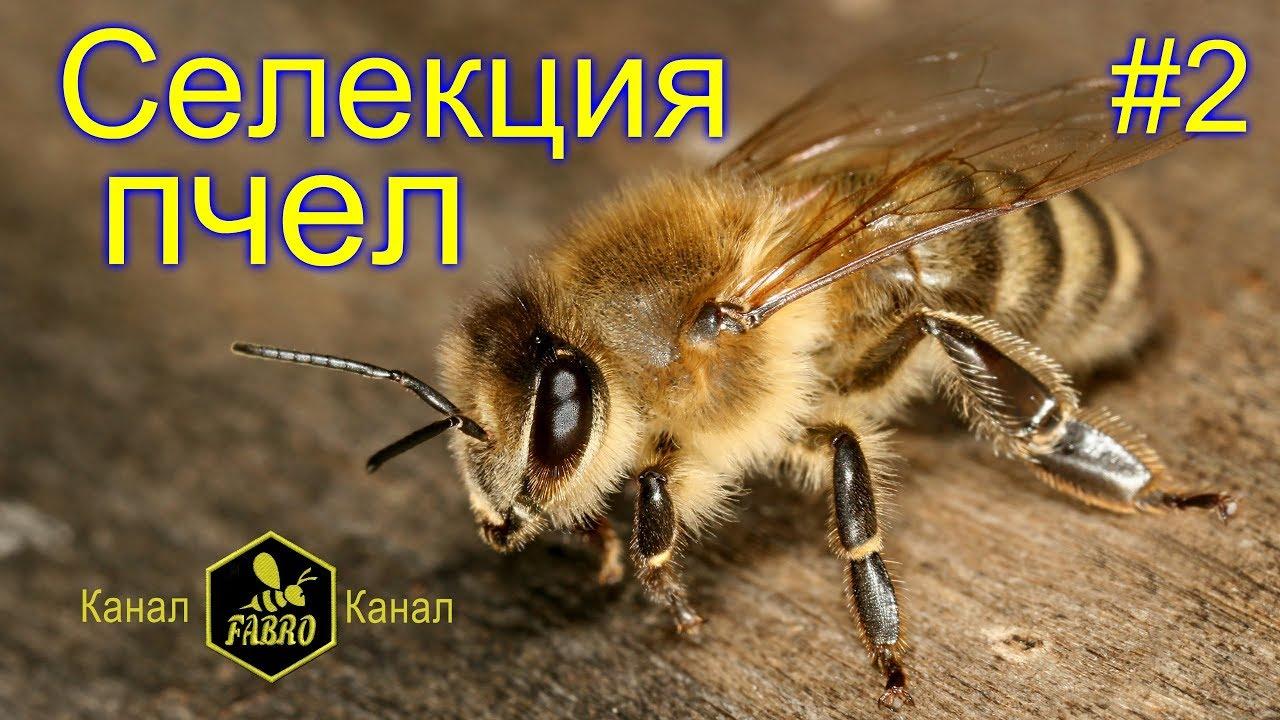 Селекция украинских пчел и путь их улучшения - Доскоч Иван Михайлович / часть2
