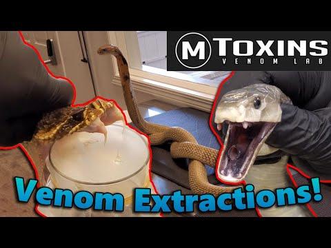 Touring MToxins- Wisconsin's Venom Lab!