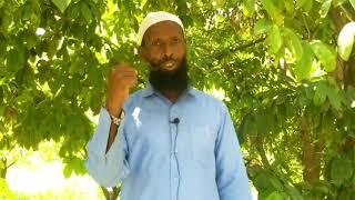 Download Lagu Abdoosh Aliyyii Afeerra Nashiidaa mp3
