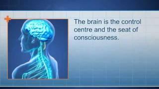 Central Nervous System & Peripheral Nervous System (CNS/PNS)