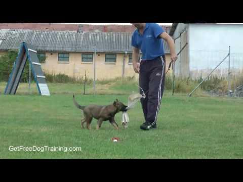 Basic Dog Training Tips For Beginners