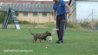 Basic Dog Training Tips For Beginners