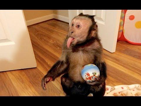 Monkey Play Room FUN!