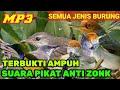 Suara Pikat Burung Kecil Suara Pikat Anti Zonk  Mp3 - Mp4 Download