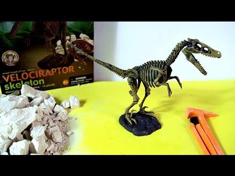 Velociraptor Skeleton Dinosaur excavation kit | Esqueleto ...  Velociraptor Sk...