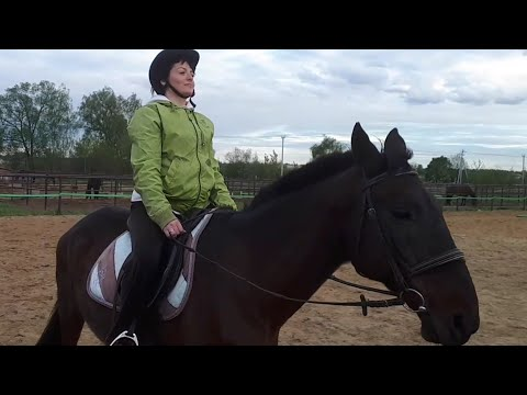 Баллада о лошади 4 детские стихи
