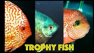 Trophy Aquarium Fish @ The Aquatic Experience Cichlid Competition