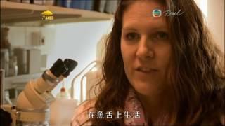 奇異大自然 1粤语
